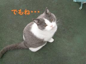 るるるん (3).jpg