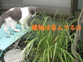 るるるん (4).JPG