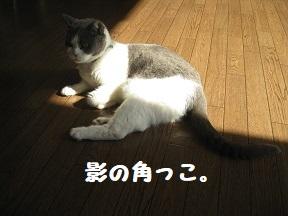 IMG_0117.jpg