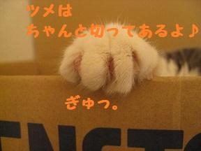 IMG_0243.jpg