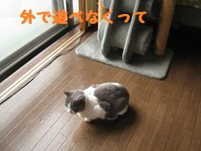 IMG_0314.jpg