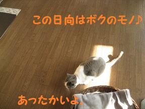 IMG_2296.jpg