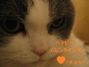 IMG_2448.jpg