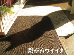 IMG_2853.jpg