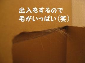 IMG_3933.jpg