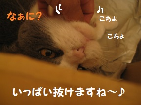 IMG_3939.jpg
