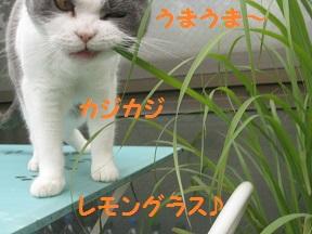 IMG_8923.jpg