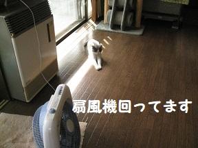 IMG_9222.jpg