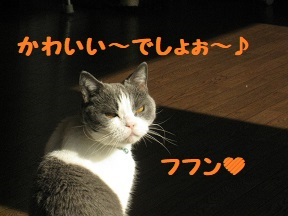 IMG_9534.jpg