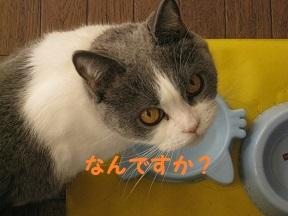 IMG_9621.jpg