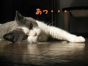 IMG_9735.jpg