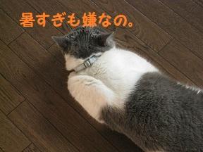 IMG_9799.jpg