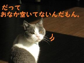IMG_9815.jpg