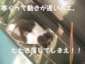 IMG_9828.jpg