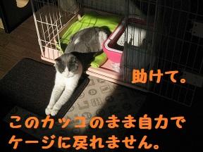 IMG_9921.jpg