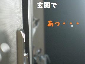 IMG_9946.jpg
