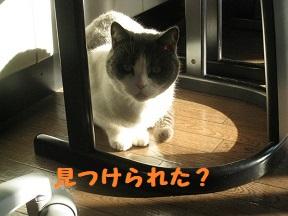 IMG_9952.jpg