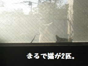 IMG_9960.jpg