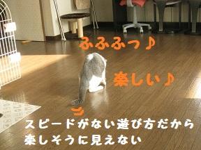 IMG_9973.jpg