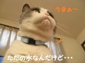 goku (5).jpg