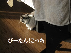 kokokan (2).jpg