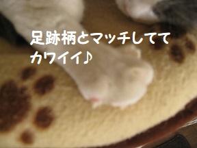 l (2).jpg