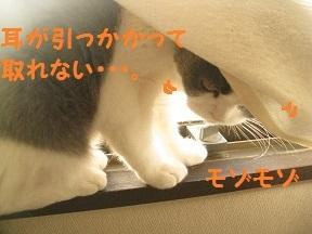IMG_7394.jpg