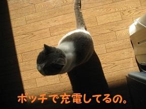 ponn (4).jpg